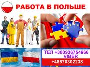 Работа в Польше 10-12 злотых в час