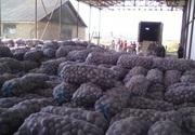 Картофель опт от 5 тон 3 грн/кг